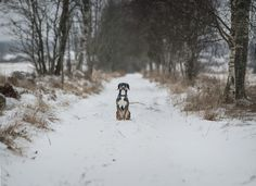 A lovely shot of my dog! Winter Time, Portrait, Dogs, Outdoor, Animals, Beautiful, Winter Season, Animais, Outdoors