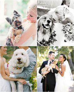 Un invitado especial que no puede dejar de estar en el gran día es nuestra mascota! Hoy te mostramos las mejores fotos para al álbum de bodas con mascotas. Dale un Me Gusta si incluirías a tu gran amigo en tu festejo!!