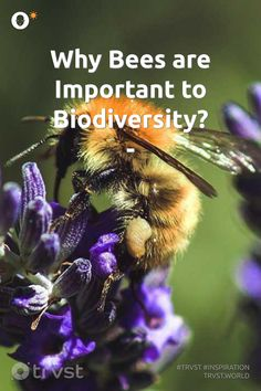 How To Kill Bees, Species Extinction, Bee Do, Bee Photo, Bee Friendly, Save The Bees, Our Planet, Change The World, Animals Beautiful