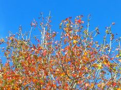 @al_ryan78 Winter colours, Hawthorne #612bluesky