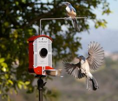 Absolutely brilliant. The bird feeder photo booth!