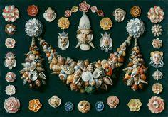Jan van Kessel l'Ancien  (Anvers 1626-1679 Anvers)  Festons, masques et rosettes de coquillages  Cuivre, 40 x 56  ; sé daté   Coll Fitz Lugt, acquis en 1946 ; inv. 5824  (pas touch frérot)