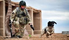 British army dog honored posthumously with PDSA Dickin Medal  Friday October 26th, 2012    by DogTime Staff        0 comments | leave your own comment      Lance Corporal Liam Tasker and Theo; for dogs, the PDSA Dickin Medal is the equivalent of the Victoria Cross. (Photo credit: PA)  Heroes can come in all shapes and sizes, and can walk on two legs — or sometimes four.