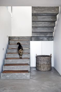 16 Super Cool Concrete Staircase Ideas - - These days, a concrete staircase is really famous for a modern house. The design of staircase with its concrete material is simple and easy to make. It is another option for you who want to design you. Concrete Staircase, Wood Stairs, Basement Stairs, House Stairs, Staircase Design, Concrete Floors, Staircase Ideas, Painted Stairs, Stone Stairs