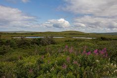 Flowers, Ponds and Sea, Fortune Newfoundland by Ben Stacey Newfoundland, Ponds, Sea, Explore, Mountains, Nature, Flowers, Photography, Travel