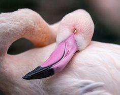 'Elegant Flamingo' Framed Photographic Print East Urban Home Size: 30 cm H x 38 cm W Frames On Wall, Framed Wall Art, Framed Art Prints, Painting Prints, Fine Art Prints, Thing 1, Canvas Art, Canvas Prints, Gloss Matte