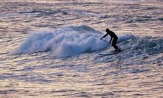 Surfer Nutrition: What to Eat to Catch the Perfect Waves | Supconnect.com Sup Surf, Paddle Boarding, Whale, Surfing, Nutrition, Eat, Whales, Stand Up Paddling, Surf