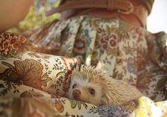 Hedgehog! via flicker/tylerwetrust