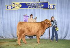 Image result for 2017 highland showmanship national western