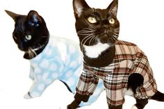 Win the cat's literal pajamas!