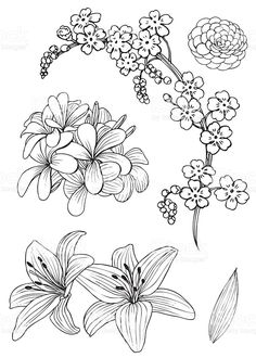 Hand drawing of exotic flowers, rendering as vector and isolated on. - Set of exotic flowers. Doodle Vector Illustration royalty-free set of exotic flowers doodle vector - Botanical Line Drawing, Floral Drawing, Drawing Flowers, Tattoo Flowers, Flower Drawings, Art Flowers, How To Draw Flowers, Flower Art, Flower Pattern Drawing