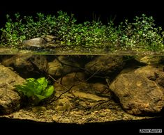 Biotope Aquarium, upper reaches of the Brisbane River Ipswich Queensland Australia. Aquarium Driftwood, Nature Aquarium, Planted Aquarium, Aquarium Fish, Fish Aquarium Decorations, Biotope Aquarium, Container Water Gardens, Brisbane River, Indoor Water Garden