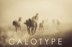 Calotype Lightroom Presets by Presets Galore on @creativemarket