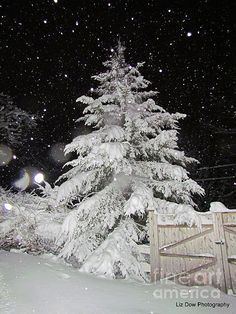 Evergreen in Snow. Original photo by Liz Dickinson Dow Photography!