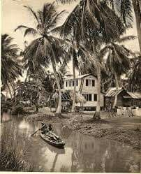 Van Drimmelenpolder jaren '40, Nickerie Foto : van der Poll.