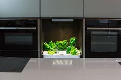 #hydrokultur #Indoorgardening #potagerdinterieur #Kit coltivazione #Cultivadores de interior #innedyrking #VILJELYÄ SISÄTILOISSA