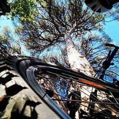 #catalunyabeauties #sportandnature #mountainbiking #valeriasbarcelona #valeriasbikeaccessoriescom #bromptonfamily #trigogear #monkiicage #monkiiclip http://ift.tt/2omQwm5