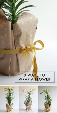 Gift wrapping idea - The House That Lars Built.: 3 Ways to wrap a flowerpot #giftwrapping - #brownpaper #embalagecadeau