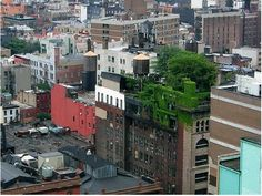Grassy & Gorgeous: Green Roof Inspiration