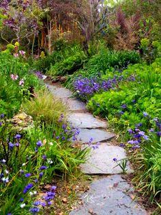Path throught the wild garden with Babiana bulbs Lush Garden, Shade Garden, Dream Garden, Garden Plants, Tropical Garden, Landscape Design, Garden Design, Garden Inspiration, Garden Ideas