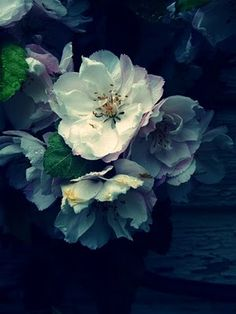 ❥ ethereal watery shades of blue
