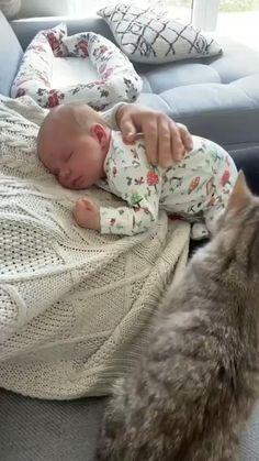 Baby Kitten Videos, Cute Baby Videos, Baby Kittens, Cats And Kittens, Cute Funny Babies, Cute Funny Animals, Cute Kids, Funny Cats, Animals For Kids