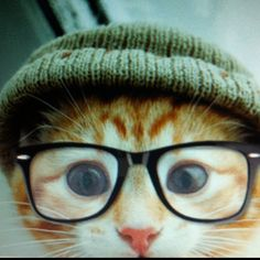 Hipster cat liked that band before it was even a band.