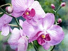 Painting Orchids in watercolor tips for adding veins to flowers