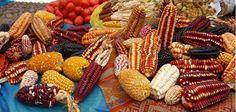 MadalBo: Guerra sucia contra los pueblos del maíz