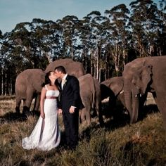 The ultimate African wedding experience - this lucky couple had a herd of elephants as special guests! (By Just Judy) Cute Wedding Ideas, Wedding Styles, Wedding Stuff, Park Weddings, Real Weddings, Groom Colours, Herd Of Elephants, Safari Wedding