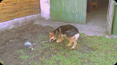 Vicces kutya kézilabda-buzgoánnyal #Lényeg lassítva