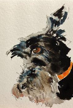 Scottish Terrier by archyscottie