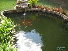 https://flic.kr/p/MV3w8M | Peixes | Peixes no pequeno lago nos Maristas. Mendes-RJ