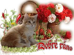 Puppy Images, Good Morning, Kitten, Photoshop, Puppies, Humor, Cats, Flowers, Animals