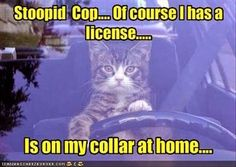 Funny animals are a laugh with 27 pics. Pictures of funny animals with captions.