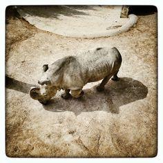 Rinoceronte (Jardim Zoologico)