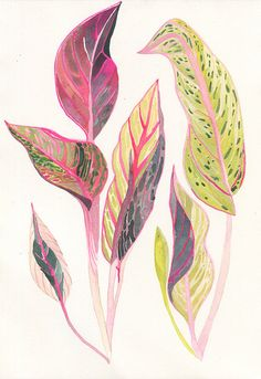 """A colourful original artwork to mix in with the artwork in your home, this item features an aglaonema plant painted in gouache. This artwork is by Home of Dodo and is 7"""" x 10"""" in size."""