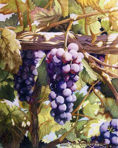 Black Grapes on Vine - Robert C. Murray II