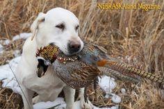Midland Musings with Jenny Nguyen – Super Dogs, Yummy Birds and Photography | NEBRASKAland Magazine