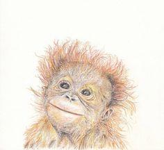 Baby animal print for nursery  Orangutang digital download