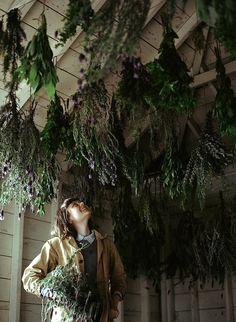 drying herbs - dry, cool dark space