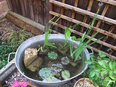 Zinková vanička ako pekná výzdoba pre záhradu