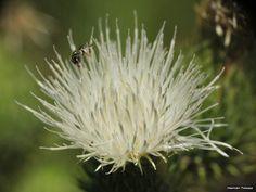 Flora Bonaerense: Miscelánea