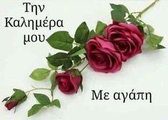 Good Morning, Rose, Floral, Flowers, Plants, Islam, Wallpapers, Good Night, Inspiring Sayings