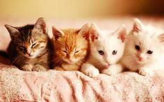 Hepimiz kedilerimizin sağlıklı ve mutlu bir yaşam sürmesini isteriz. Bunun için elimizden geleni yaparız. Fakat günlük hayatımızda kedi dostlarımızın ömrünü kısaltacak bazı şeyler yapıyor olabiliriz. Detaylar ajanimo.com'da.. #ajanimo #ajanbrian #hayvan #animal #kedi #cat