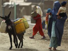 Afghan Woman Walks Along with Donkey Carrying Jerry Cans Filled with Water in Kabul, Afghanistan
