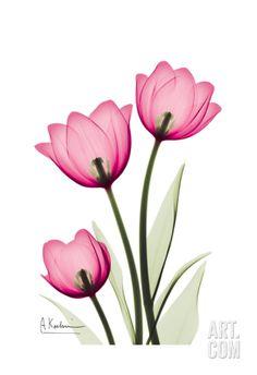 Tulips Art Print by Albert Koetsier at Art.com