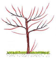Pruning Fruit Trees, Flora, Gardening, Garten, Plants, Lawn And Garden, Garden, Square Foot Gardening, Garden Care
