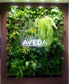AVEDA Shop green wall