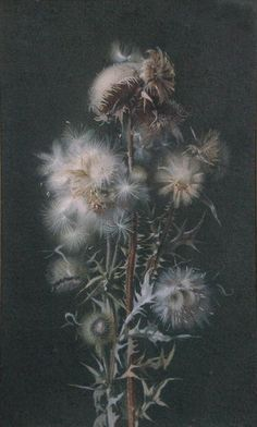 Some thistledown would be nice as another symbol of freedom